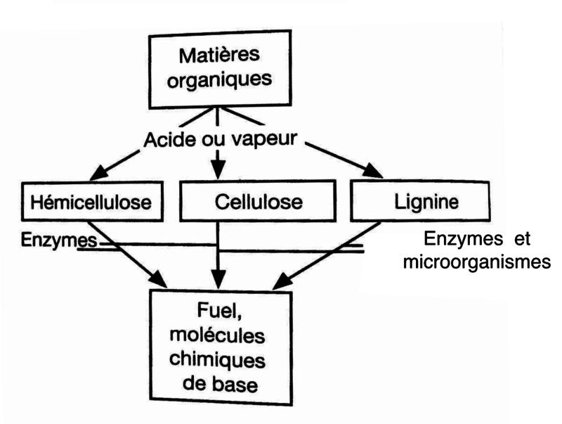 conversion-biochimique